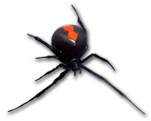 748pxredback_frontal_view1